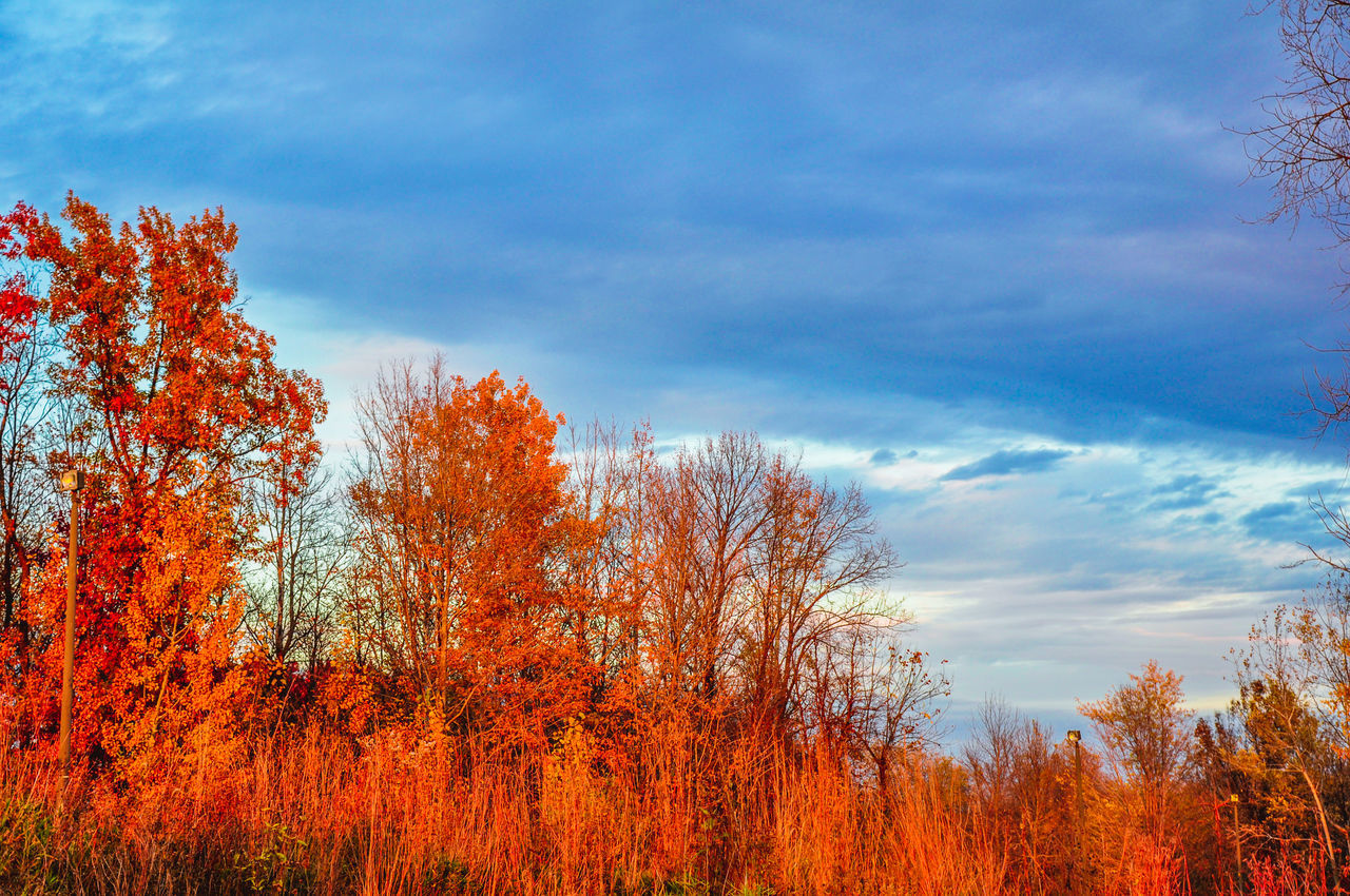 tree, sky, nature, cloud - sky, beauty in nature, tranquility, tranquil scene, scenics, autumn, outdoors, no people, day, growth, forest, low angle view, plant, landscape