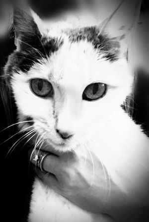 My Baby Girl <3 Yes, Another LiliBug Pic MyLilibug Bnw Pet Photography  My Photography IV time for bug ! Good evening friends!