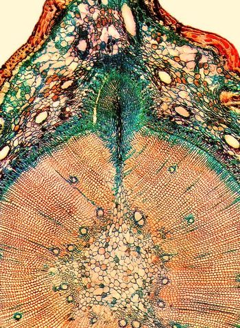 Wood Stamp Abstract Photography Artistic Experimental Life Macro Photography Natural Paint Textured  Tree Trunk Wood Backgrounds Branch Close-up Color Day Detail Litography No People Stamp Textured  Tree Section Close Up first eyeem photo