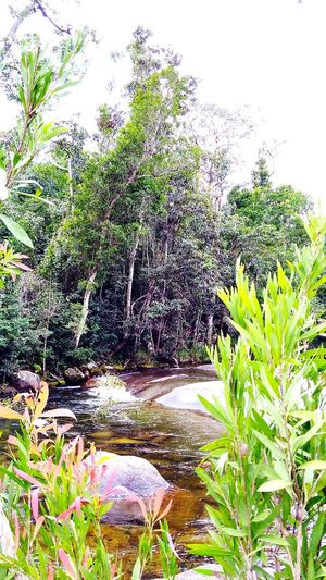 Outdoors, Outside, Open-air, Air, Fresh, Fresh Air, Tranquility Natural Photography Nature Water Growth Beauty In Nature Scenics Rainforest Australia Natural Light Beauty In Nature No People