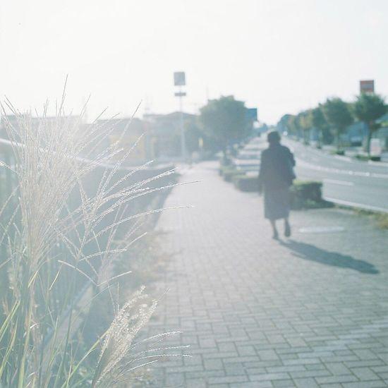 Hasselblad Filmisnotdead Filmcamera Film Photography Japan Japan Photography