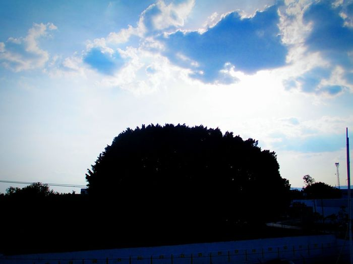 Sun Clouds Sky Shadow Amaizing Tree Big Tree Blue