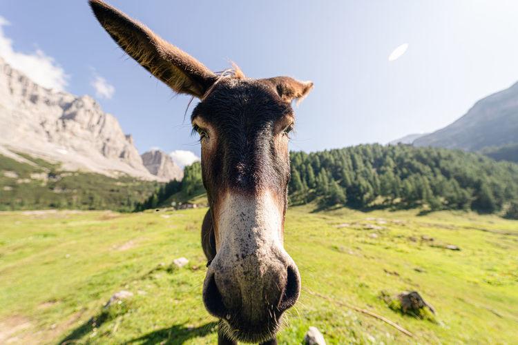 A nice donkey on a field near lake tovel