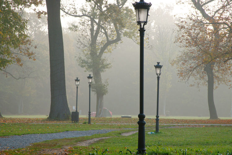 Street light and trees in park