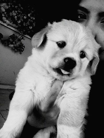 my dog :)))