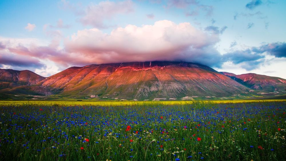 Cloud - Sky Landscape Scenics Multi Colored Beauty In Nature Mountain Travel Destinations Sunset Freshness Outdoors Mountain Range No People Castelluccio Di Norcia Flower Flowers Blooming Flowers Bloom Agriculture Nature Sky