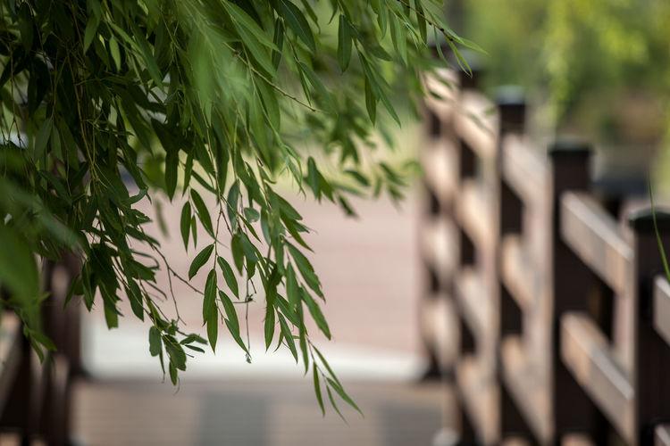 Leaves against bridge railing