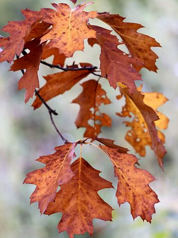 Autumn 🍂 Plant Part Leaf Autumn Change Close-up Nature Plant Leaves Fragility No People Day Tree Outdoors Vulnerability  Beauty In Nature Focus On Foreground Orange Color