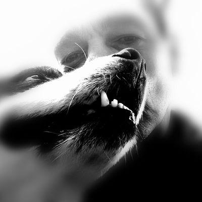 Human Eye Pets Eyelash Dog Human Face