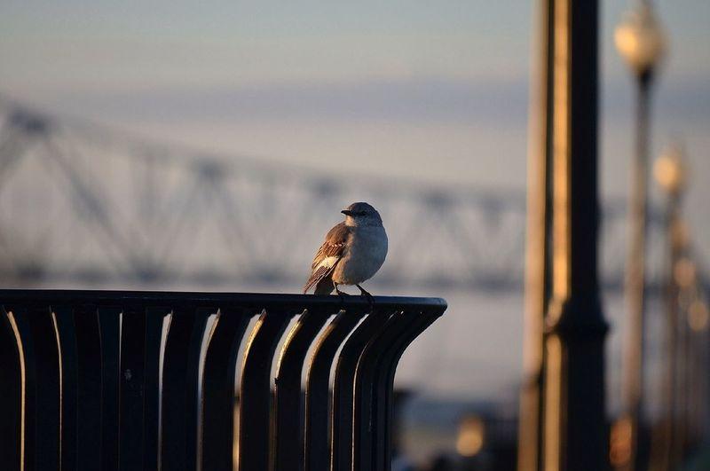 Bird perching on garbage can