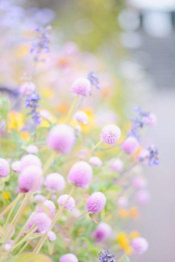 雨がポツポツ…☔️ Rain レイン 雨 山梨 秋 EyeEm Best Shots Enjoying Life EyeEm Gallery EyeEm Nature Lover Flowers Relaxing