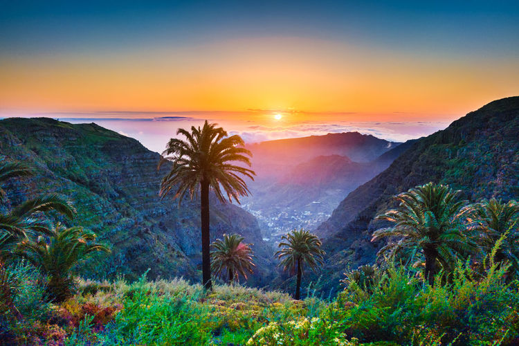 Scenic view of palm trees on mountain during sunset