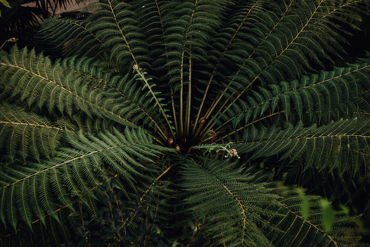 High angle view of fern on tree