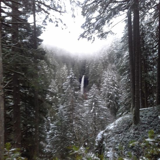 Tree Nature Beauty In Nature Forest Outdoors Scenics Fog Sky Tranquility No People Cold Temperature Weather Winter Snow Waterfall Freshness Pine Woodland Cloud - Sky