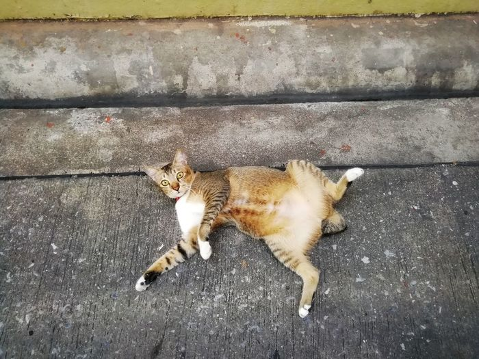 High angle view of cat relaxing on street