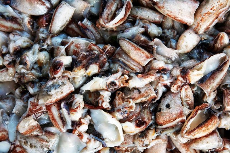 Full frame shot of squids