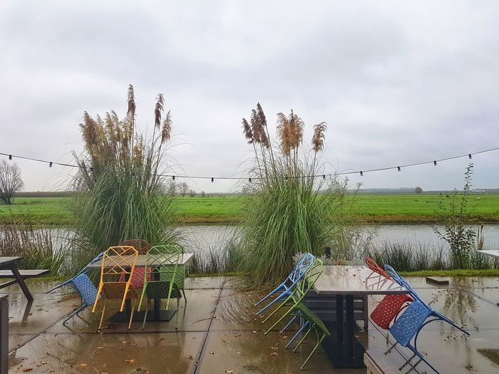 Table And Chairs Reeds Horizon Over Water Flat Land The Netherlands Terrace Growth Outdoors Cloud - Sky Sky Day Nature No People