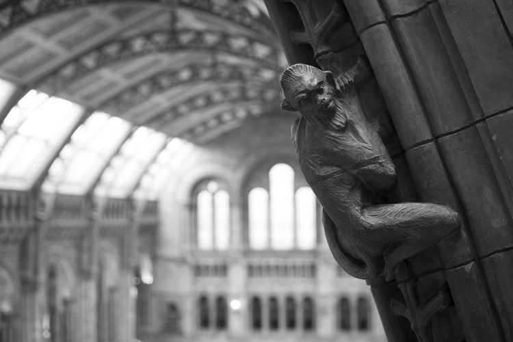 Architecture LONDON❤ London Natural History Museum Animal Themes Animal Wildlife Architectural Column Architecture Details Art And Craft Built Structure Ceiling Focus On Foreground Indoors  Monkey Natural History Museum London Sculpture Statue