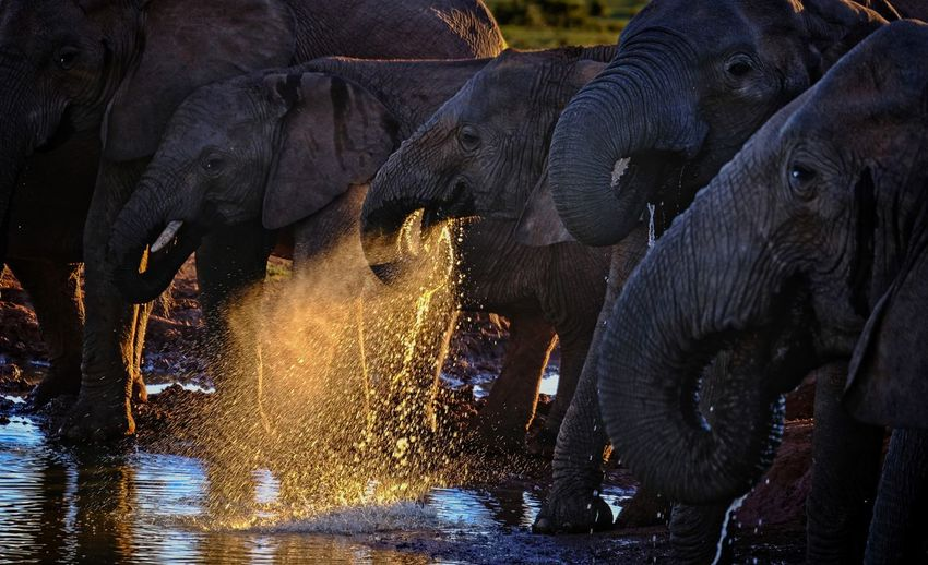 View of elephant drinking water from water hole