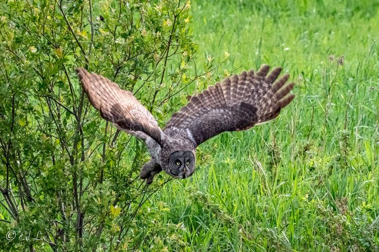 Bird flying in a field