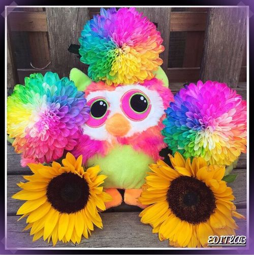 Little toy owl surrounded by flower's 💐🌺💐🌺💐🌺💐 Owl Toy Outside flowers Flower Sunflowers Outside Summer Home Cute Colourful Likearainbow 🌈🌈🌈