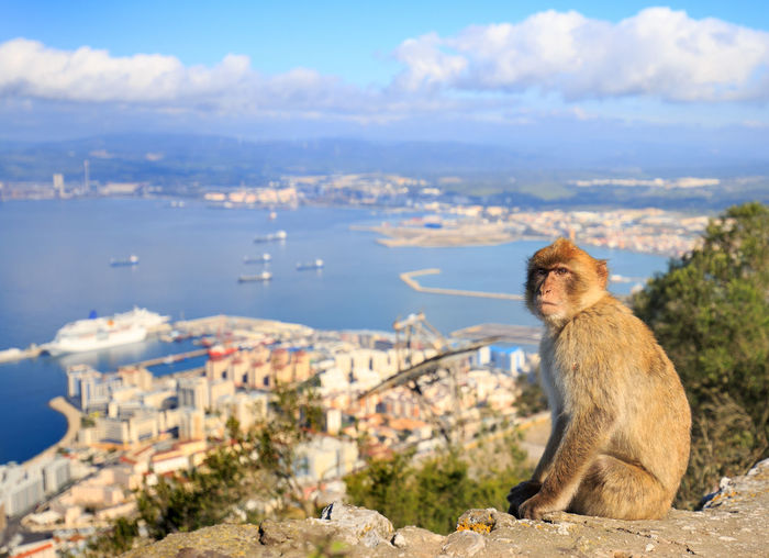 Macaque sitting on stone by town