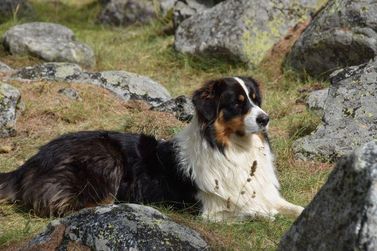 One Animal Animal Themes Mammal Animal Canine Dog Pets