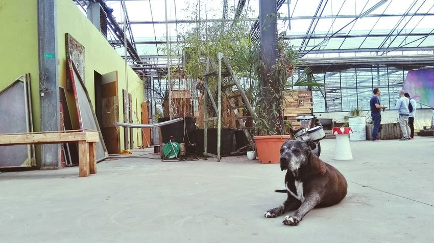 Greenhouse Dog Animal Indeserres Vzw Rauw Hever Belgium♡ Zomerbar Colors
