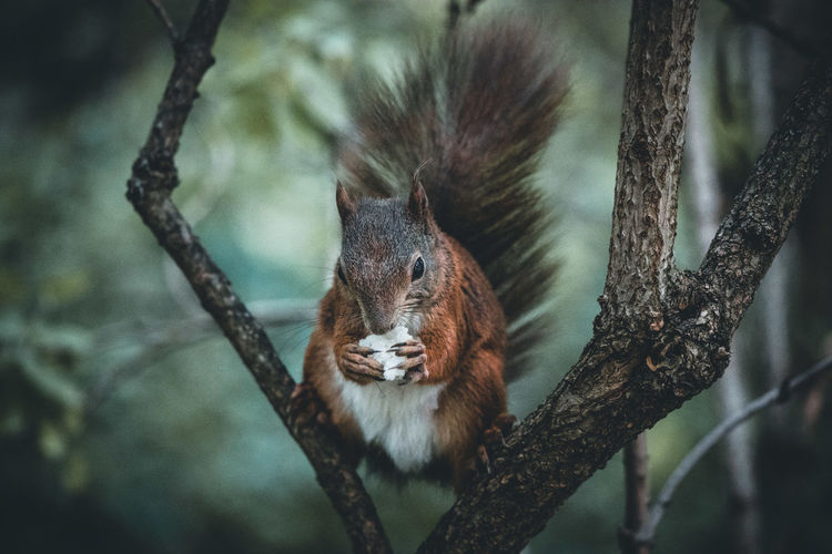 Close-up of squirrel on tree