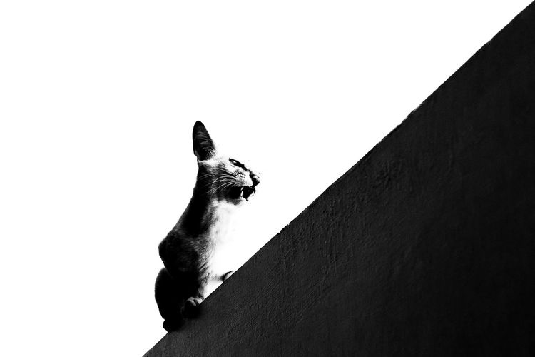Stay out of my territory! Heisenberg Breaking Cat Silhouette Contrast Bnw_collection Bnw Monochrome _ Collection Monochrome Black And White Mammal Animal_collection Animal Themes Animal Neko Gato Feline Caturday Cats Of EyeEm Cat Lovers Cat A New Perspective On Life