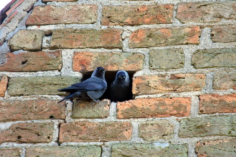 Bird perching on brick wall