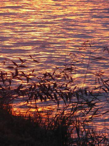 Sunset Water Orange Color Enjoy Life Enjoying The View Waterfront Sunsetreflections