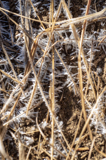 close up detail of early morning frost on brown dry grasses in Sierra Nevada mountains of California Close-up Plant Dry No People Nature Day Full Frame Outdoors Selective Focus Backgrounds Agriculture Dried Plant Land Dead Plant Frosty Mornings Nature Pattern Patterns In Nature Background Texture Cold Grassy