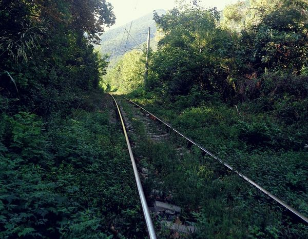 Abkhazia Travel Green Color Railroad Track Nature Trip EyeEm Gallery Gagra No People Beautiful Eyephotograpy EyeEm Best Shots Road Abandoned Abandoned Station South Green Color Eyeem4photography