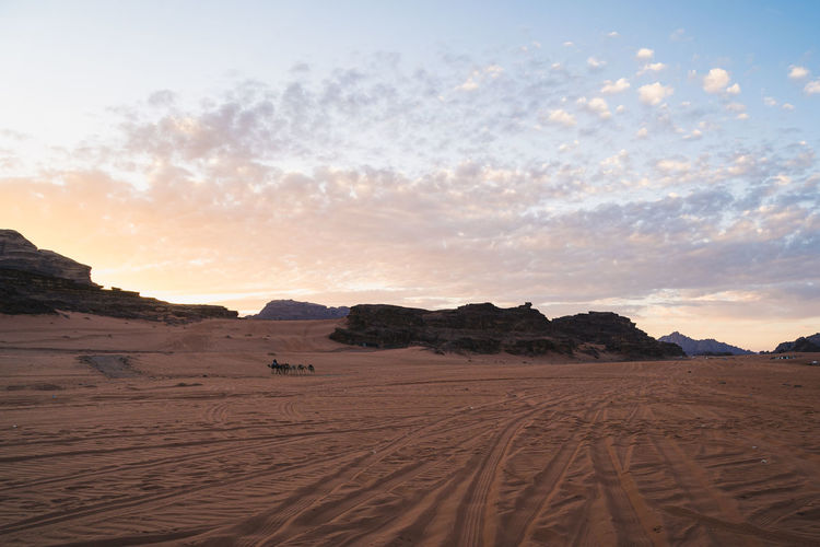 Scenic view of desert and dromedaries against sky during sunset