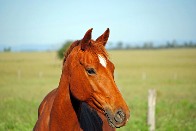 Beauty Beauty In Nature Chesnut Country Coutryside Grass Green Horse Horse Riding Horses