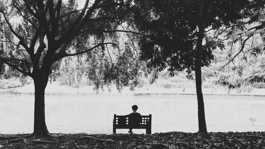 Rear view of man sitting on bench against trees