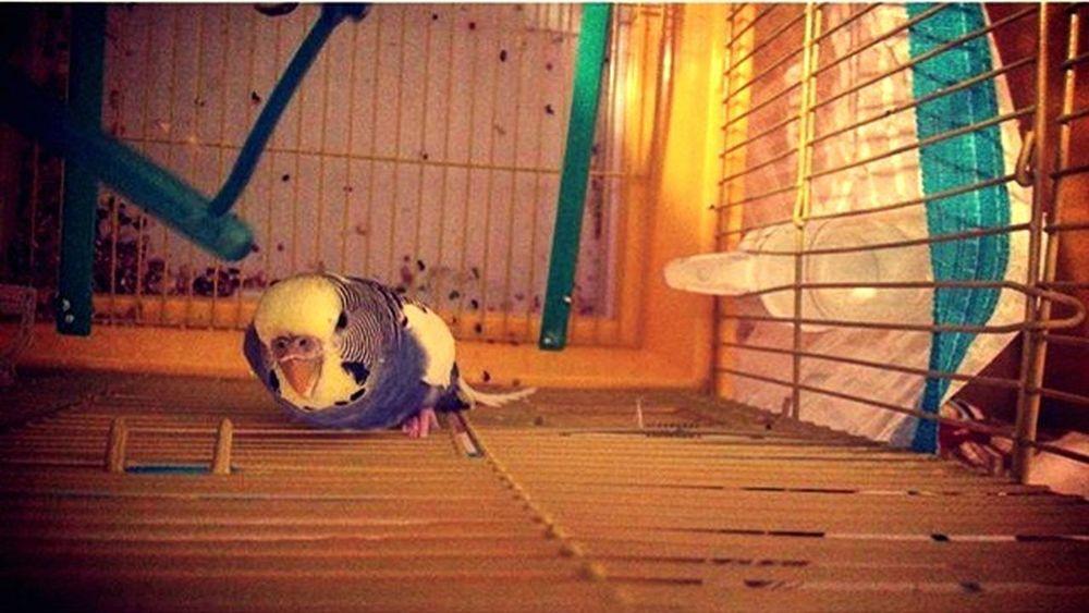 Mybird Turkeyphotooftheday Turkey Bird şıkıdım Blue Yellow Angrybirds Ugly Love ♥ Mybaby World