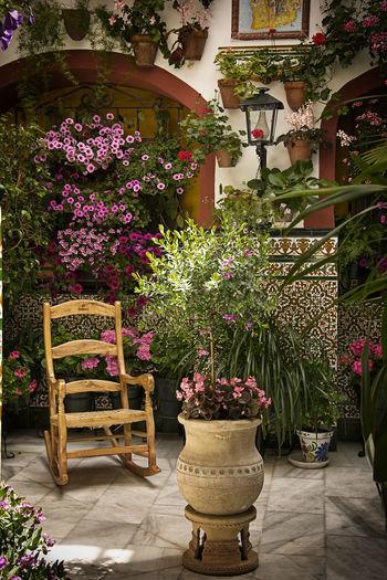 Architecture Beauty In Nature Built Structure Flower Nature Patios De Córdoba Plant Potted Plant