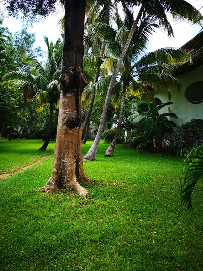 Coconut Trees Tranquility Outdoors Landscape Scenics Park - Man Made Space