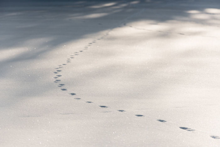 footprints in the snow Fußspuren Im Schnee Animal Themes Cold Temperature FootPrint Footprints In The Snow Nature No People Outdoors Paw Print Snow Winter