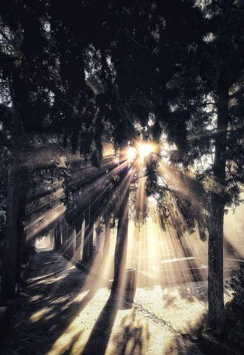 Tree Illuminated Road Car Sky