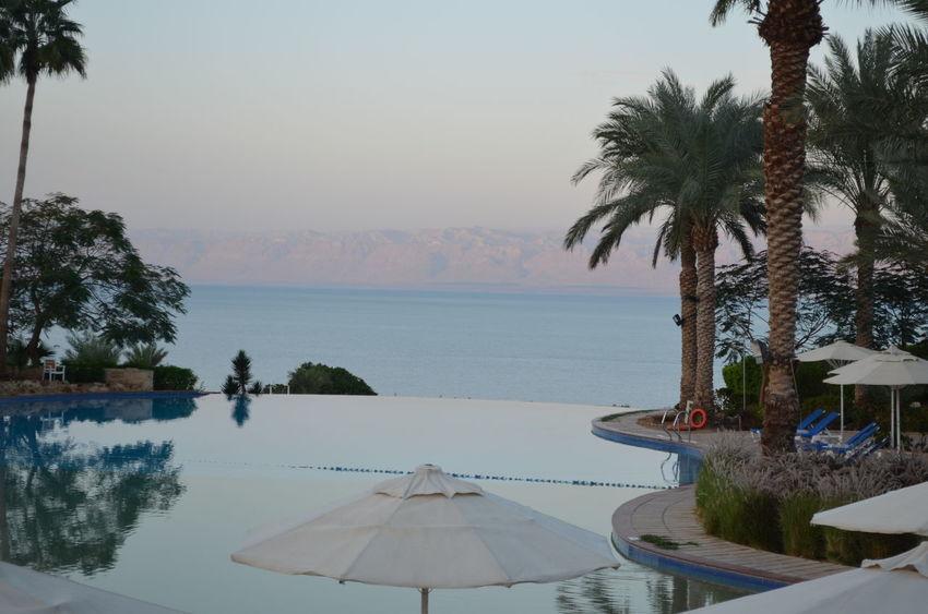 Jordan Middle East Middle East Spa Hotel Ressort Moevenpick Jordan Vacations Dead Sea  Totes Meer Travel Destinations Traveling Jordanien Vacation Palmtree Palmen Palms Hotel View Infinity Pool