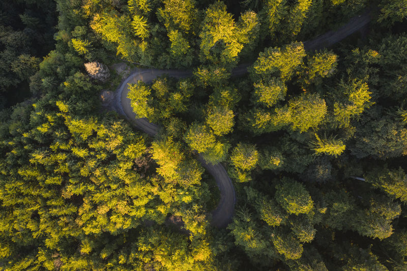 Road in a forest aerial light over the autumn colors. Aerial Shot Drone  EyeEmNewHere Road Romania Aerial Photography Aerial View Autumn Beauty In Nature Branch Day Forest Forest Photography Green Color High Angle View Landscape Nature No People Outdoors Scenics - Nature Sunset Tranquil Scene Tranquility Tree Yellow
