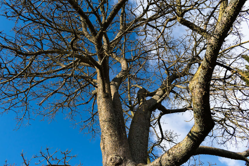 Castle of Abrantes Portugal Bare Tree Beauty In Nature Blue Branch Clear Sky Day Growth Low Angle View Nature No People Outdoors Sky Tree Tree Trunk