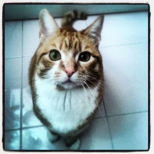 """""""Se gli animali potessero parlare..."""" (Oliver) Cute Pets Cat Occhi Ilovemycat"""