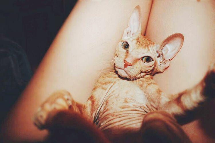 Самый фотогеничный котик, который делает селфи лучше чем ты😃😃😃Zoology One Animal Cat Cat Lovers Cats 🐱 Catstagram Catsofinstagram Selfie ✌ Selfies Selfi кот Котик котэ Котейка кото_фото котоселфи селфи себяшка себяшечка селфидлявсех селфихуелфи