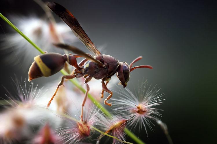 Common Bee -