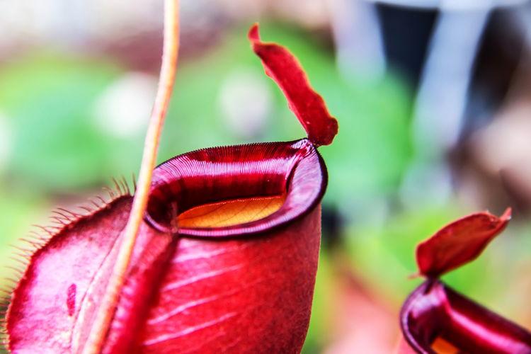 Plants that eat