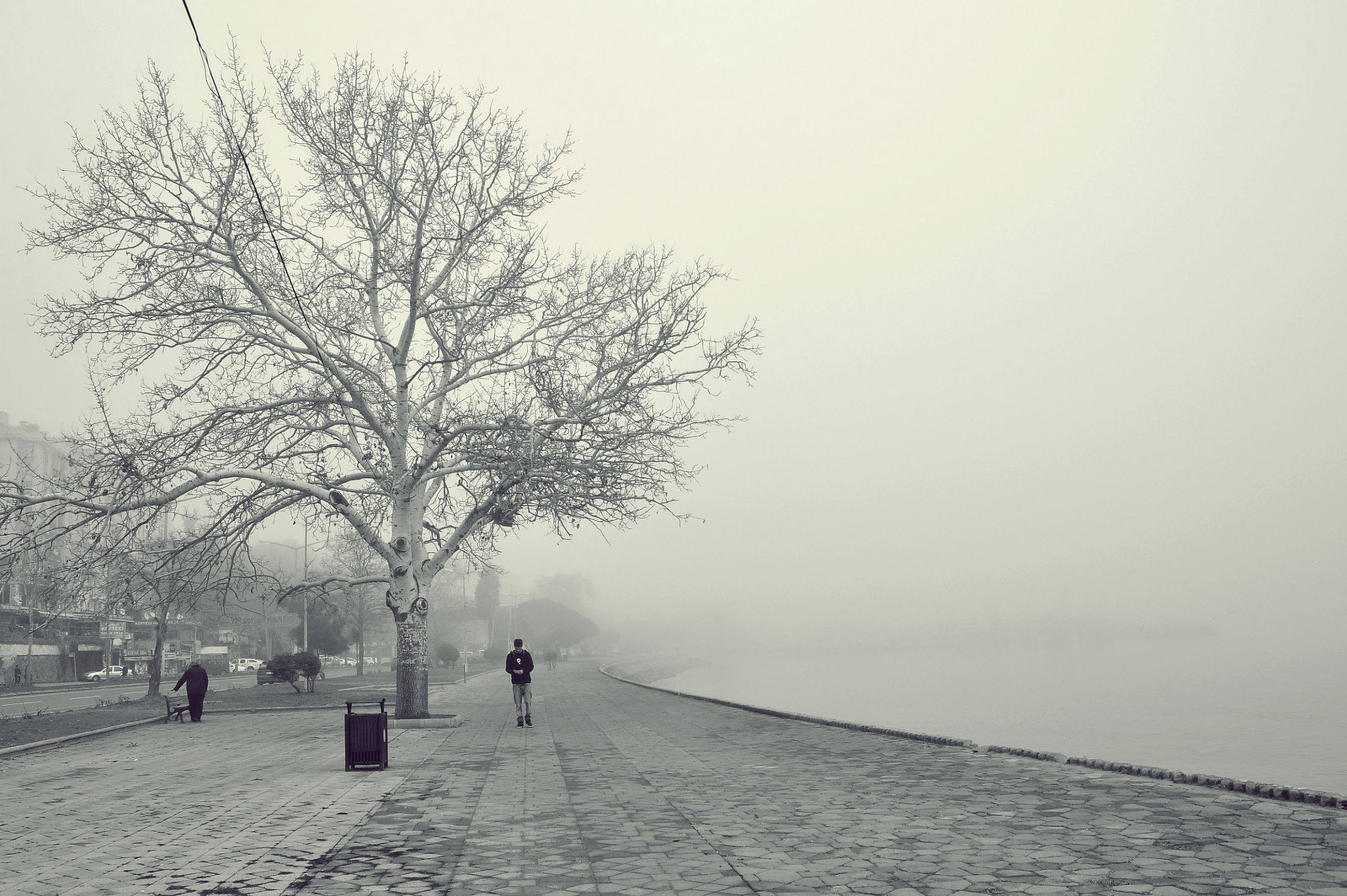 fog, tree, foggy, copy space, weather, bare tree, walking, tranquility, nature, tranquil scene, season, day, winter, full length, lifestyles, the way forward, branch